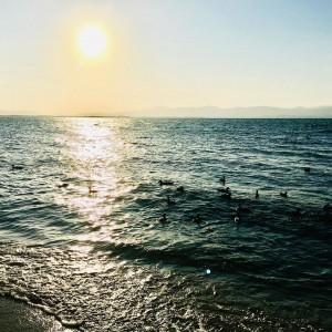 シャーレ水が浜水鳥